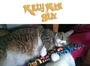 Kitty Kick Stix - San Clemente