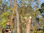 C&L Tree Service, Inc.