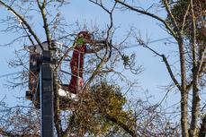 Tree Trimming Long Island