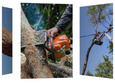 Charles Gilbert Tree Service, Inc.