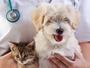 EZ Vet Pet Healthcare Center
