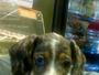 Pet Shops New York, NY