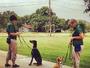 Action Pack Dog Center - Dog Training