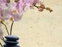 Caring Palms Massage and Reiki