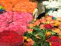 Callas Florist