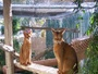 Whispering Pines Kennel and Cattery